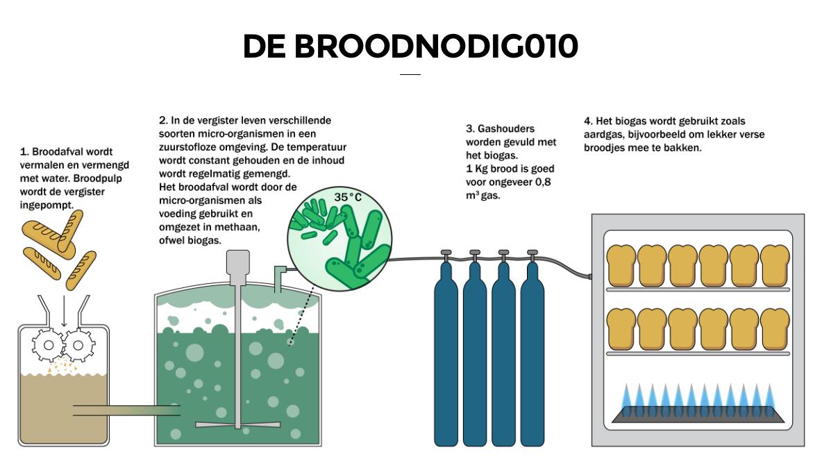 groepen micro organismen